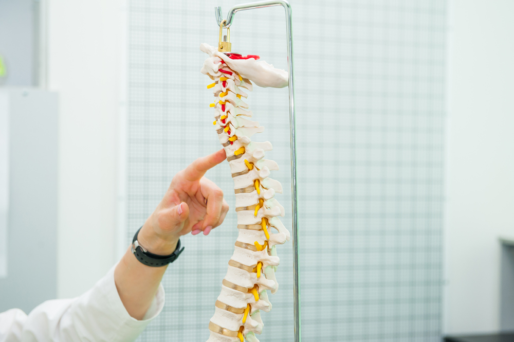Dr. Jeranek talking to a patient about spinal health using a model.